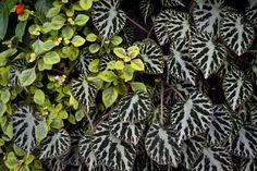 http://fiestafarms.ca/wordpress/wp-content/uploads/2012/08/Leaf-patterns-620x413.jpg