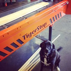 One of #TigerStop's #shop #dogs, Ms Riley, helping out with the #TigerRip1000. #iwf #iwf14
