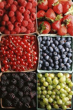 srawberries, rasberries, blueberries, gooseberries and currants