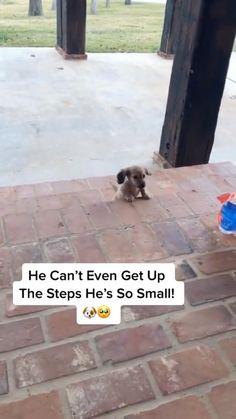 Cute Puppy Tries To Climb Steps🥺😍