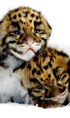 we love leopard print! facebook.com/forevergizia