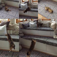 Katzentobezeit  #unddraußenschneits #gemütlichzuhause by kerstingier