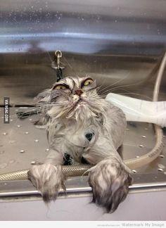 Cat bath returns!   CrazyPics