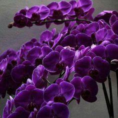 Great Pic Purple Flowers rosas moradas Ideas Purple flowers are noble flowers. There're deluxe and elegant, stylish and boheme. The examples below repor