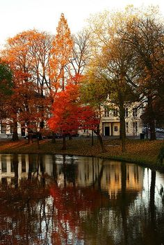 Orange, red, brown & green autumn Trees @ Lepelenburg Utrecht by lambertwn on Flickr #autumn
