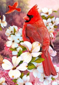 Cardinals house flag featuring a close-up look at a beautiful red bird perched amongst an array of brilliant, white dogwood blossoms while a second cardinal is soaring off into the distance. This gorg All Birds, Love Birds, Pretty Birds, Beautiful Birds, State Birds, Cardinal Birds, Flag Decor, Bird Pictures, Colorful Birds