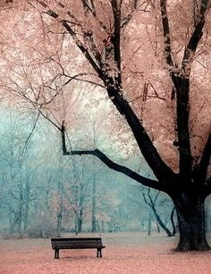 Cherry blossoms above a bench