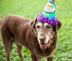 Any pet owner who has adopted a dog from a pet rescue or humane society knows how disappointing it can be to not know their pet's birth date. But this year you can celebrate your rescued dog's birthday on August Dog Birthday, Birthday Parties, Happy Birthday, Rescue Dogs, Animal Rescue, Dog Forum, Golden Retriever Rescue, Gotcha Day, Network For Good