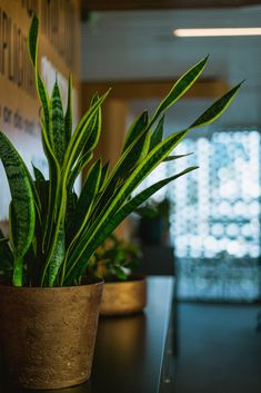 🌱  There are certain house plants that oxygenate a room and can help you concentrate #plants #plantfacts #officeplants #officedesign #interiors Location Plan, Edition Hotel, Shared Office, Office Plants, Working People, Coworking Space, Creative Director, Interior Inspiration, House Plants