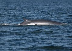Whale watching is part of Maine vacation