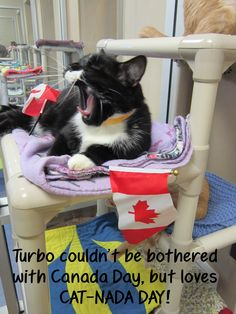 Turbo celebrates CATada Day at the Edmonton Humane Society