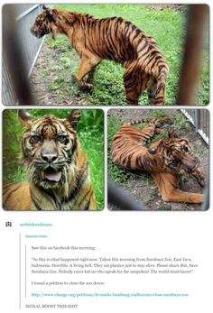 Surabaya Zoo is a botanical zoo located in the city of Surabaya in East Java, Indonesia. And it's probably the worst zoo on the planet. Surabaya, Cane Corso, Sphynx, Wild Life, Most Popular Boards, Gato Grande, Le Zoo, Amor Animal, Animal Pics
