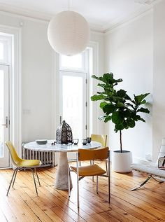 Beautiful dinning room decoration in white color wall with a dining table and a chairs, a tree jar with wooden polished floor. It's a elegant decoration at this modern and classic dinning room. http://www.urbanroad.com.au/