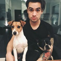 Bogart and Penny Lane with Brendon Urie Pretty Men, Boston Terrier, Beautiful Men, Cute Men, Boston Terriers