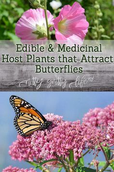 Use these edible & medicinal host plants to create thriving butterfly garden and visual feast for the naturalist's eye. Gardening with plants that attract butterflies and host butterfly larvae are excellent way to craft a thriving pollinator community in Organic Gardening, Gardening Tips, Plants That Attract Butterflies, Garden Care, Garden Crafts, Garden Ideas, Medicinal Plants, Winter Garden, Garden Planning