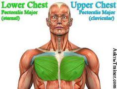 upper lower chest exercise videos #chest