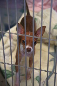 Arizona Dog Needs a Family -  People Please Share - Foster - Support Your Animal Rescues and Shelters