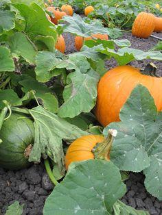 PumpkinPatch - - ala Mose!!!!   Haha!!!