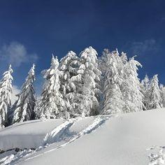 #winterwonderland #winterisbeautiful #sovüschnee #mariaalm #alpenparksmariaalm  #schifoan Winter Wonderland, Snow, Instagram, Outdoor, Beautiful, Outdoors, Outdoor Games, The Great Outdoors, Eyes