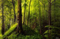 Prehistoric Forest: Untouched