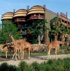 Walt Disney World - Animal Kingdom Lodge - love the hotel from the decor to the food, hate waiting on buses (and very few princess items in the gift shop...).