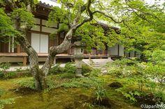 Japaninfo added 18 new photos to the album: พื้นมอสหนาๆ+เมเปิ้ลจิ๋วๆปกคลุมทั่วบริเวณวัด Jojakko-ji,Arashiyama — at 常寂光寺 / Jojakko-ji.