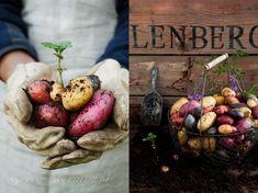 Potatoe by Kinga Błaszczyk-Wójcicka Types Of Photography, Food Photography, Kinfolk Magazine, Organic, Homemade, Vegetables, Eat, Recipes, Gardens