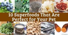 Kale, broccoli, kefir, chia, and blueberries are some human superfoods that are also perfect for your pet's health. http://healthypets.mercola.com/sites/healthypets/archive/2014/04/25/10-superfoods.aspx
