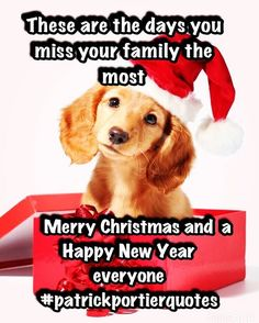 """These are the days you miss your family the most "" Merry Christmas and a Happy New Year everyone  #patrickportierquotes #merrychristmas #happyholidays #happynewyear #family #friends #puppylove #puppy #quotes #quote #holiday #quotestoliveby #christmas #christmasquotes #quoteoftheday #love #selamatharinatal #feliznavidad #harinatal  #tahunbaru #indo #Indonesian  #dutch #asian"