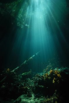 Sunken Forest at the Passage