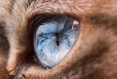Confira o trabalho de Andrew Marttila, que nos mostra um universo escondido em belas fotografias de olhos de gatos.