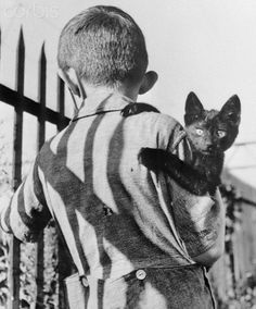 Original caption: With the suspicion typical of his species, this stray cat, picked up for adoption by a little boy, stared sharply at the cameraman who took this picture. September 20, 1940.