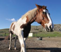 How Hoof Form Affects Your Horse -- Great info!   equinewellnessmagazine.com