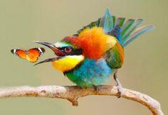Birds of Israel