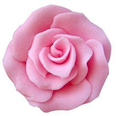 Trandafiri mici 42 buc roz Plants, Plant, Planets