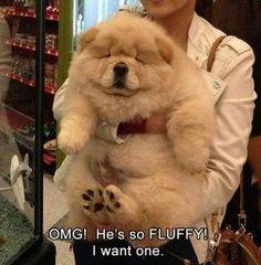 Funny Animals #funnydogs