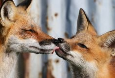 theanimalblog:    Affection. Photo by Hannibals Animals
