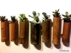 Succulents in a bamboo - Piante grasse in canna di bambù con magnete - le insolite cose 2014