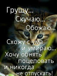 ЛЮБЛЮ СКУЧАЮ ХОЧУ ОБНЯТЬ ПОЦЕЛОВАТЬ И ПРОСТО РЯДОМ БЫТЬ С ТОБОЙ!!!???*** Kitten Images, Russian Quotes, Motivational Quotes, Funny Quotes, I Love You, My Love, Better Half, Life Motivation, In My Feelings