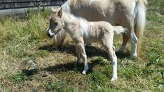 Little Hooves Oceania Opal, outside on a bright sunny day!