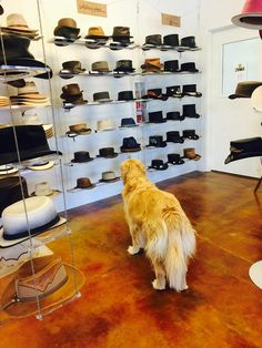 Ruby picking out hats at The Hat Hangar! #AmericanHatMakers #HandmadeHats #1800NiceHat #smallbusiness #marketing #success #leatherhats #wholesale #hatmanufacturers #branding