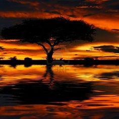 Masai Mara (Kenia) Tree of life
