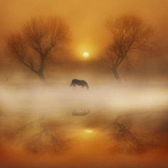 A Horse Quietly Grazing in a Early Golden Fog Fall Morning. Tier Fotos, Jolie Photo, Horse Art, Mellow Yellow, Beautiful Horses, Beautiful World, Enchanted, Mists, Beautiful Pictures