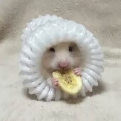 Cute Animal Eating Something Special