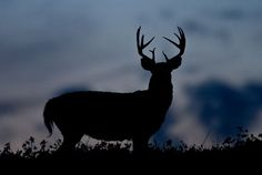 Best Times to Deer Hunt: When You Need to be in Your Stand this Fall http://riflescopescenter.com/category/bsa-riflescope-reviews/