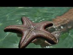 Starfish, Animals, Animales, Animaux, Animal, Animais