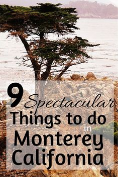 Explore the beauty of Monterey, California from the saddle of a bike, the top of a mountain, the seat of kayak and the top of a paddleboard.  Here are 9 incredibly fun and active adventures to have in Monterey County, California!