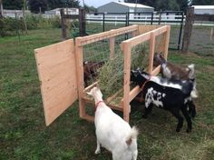 We are making and selling custom goat feeders. After looking at what I could purchase at the local farm store, then browsing the internet and visiting neighboring farms, I decided I could… Feeding Goats, Raising Goats, Goat Shelter, Animal Shelter, Sheep Feeders, Goat Hay Feeder, Goat Playground, Goat Shed, Goat House