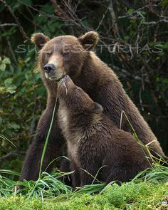 Mother and Baby Animals MOM and BABY BEAR Photo 8 X by WildBabies