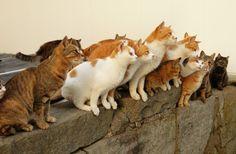 A-O-Shima, a cat paradise in Japan. 愛媛県大洲市、瀬戸内海の海上には、15人ほどの島民に対して100匹以上のネコが暮らす「青島」という小さな島が存在します。そんなネコ好きの心を激しく奮わせる猫島までは、定期旅客船が出ているとのことだ